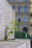 Plant grow up through brick pave — Stock Photo