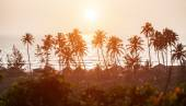 Silhouette of palm trees at Goa, India — Stock Photo