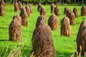 Haystack on field — Stock Photo