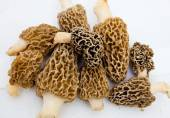 Morchella Morels Sponge Mushrooms — Stock Photo