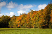 Cape Croker Woodside Autumn Fall Forest Trees — Stock Photo