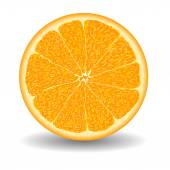 Oranges slice over white vector illustration — Stok Vektör