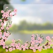 Oriental style painting, cherry blossom in spring — Vector de stock  #69297681