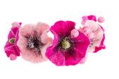 Beautiful flower Malva souvenir made of wool — Stock Photo