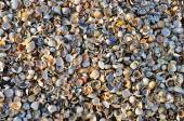 Small shells — Stock Photo