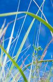 Blades of grass — Stock Photo