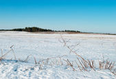 In March on fields snow starts thawing — Stock Photo