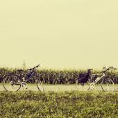 Bicycles near a corn field — Stock Photo