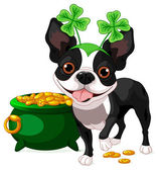 Boston Terrier celebrates Saint Patrick Day — Stock Vector