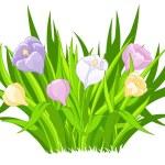 Beautiful crocus bouquet — Stock Vector #65449593