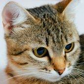 Gato dos. — Fotografia Stock