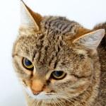 Cat inquiring look. — Stock Photo #63944385