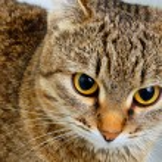 Cat inquiring look. — Stock Photo #63944387