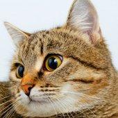 Gato. — Foto de Stock