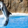 Dolphin dancing in water in Loro Park, Tenerife — Stock Photo #59115527