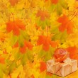 Autumn maple branch with gift box on the abstract background — Stock Photo #52469667