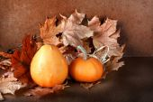 Pile of pumpkins with autumn foliage on abstract background — Stockfoto
