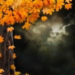 Fabulous night scenery, ancient trees, the bright moon — Stock Photo #53734973