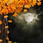 Fabulous night scenery, ancient trees, the bright moon — Stock Photo #53807269