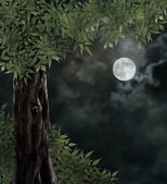Fabulous night scenery, ancient trees, the bright moon — Stock Photo