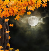 Fabulous night scenery, ancient trees, the bright moon — Stock Photo