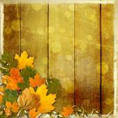 Bright multicolored autumn leaves on the abstract beautiful back — Stock Photo