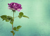 Drawing beautiful bouquets of roses on pastel background — Stock Photo