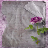 Beautiful painted rose with frames for congratulations or invita — ストック写真