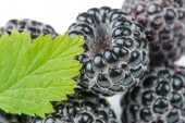 Blackberries with Green Leaf Close-Up — Stock Photo