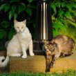 Two Cats Outdoors — Stock Photo #65355875