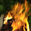 Burning Fire Outdoors — Stock Video #65997019