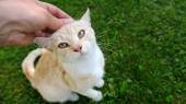Hand Petting a Cat (16:9 Aspect Ratio) — Stock Photo