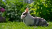 Cute Fluffy Rabbit Outdoors in Summer (16:9 Aspect Ratio) — Stock Photo