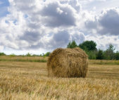 Haystacks on the grain field after harvesting  — Stock Photo
