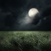 Green field at the moon light — Stock Photo