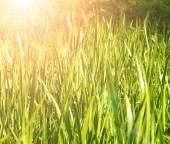 Green grass and sunlight — Stock Photo