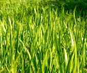 Green fresh grass — Stock Photo
