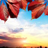 Autumn leaves and sunset sky — Stock Photo