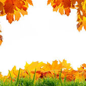 Autumn leaves and green grass — Stock Photo