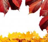 Yellow and orange autumn leaves — Stock Photo