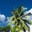 Palm leaves over tropical beach — Stock Photo #70285991