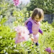Cute little girl watering summer garden — Stock Photo #63649807