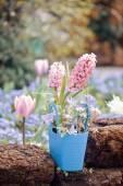 красивая клумба цветов — Стоковое фото