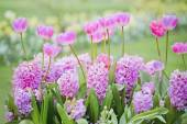 Beautiful flowers bed — Stock Photo