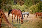 Horses herd — Stock Photo