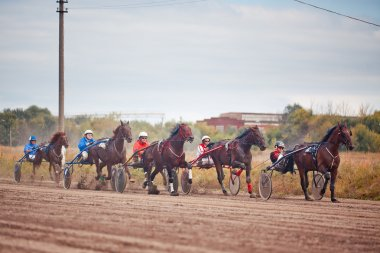 Racing for the horses trotting breeds