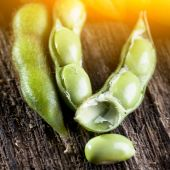 Soybeans with sunshine — Stock Photo