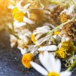 ������, ������: Dry Chamomile flowers