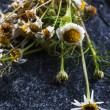 Medicine Chamomile flowers — Stock Photo #57929301