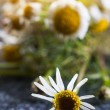 Medical chamomile flower — Stock Photo #57929303